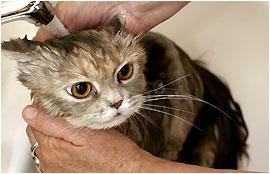 La sant chat et - Quand peut on couper les griffes d un chaton ...